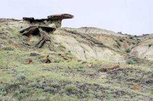 Dinosaur Provincial Park 2