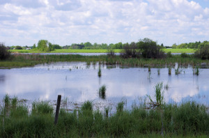 There are 1000's of small ponds like this in the middle regions of the Red Deer River. Millions of waterfowl rely on these for breeding.