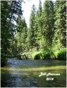 The Raven River is a quiet stream noted for excellent fishing,