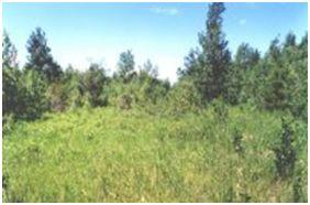 innisfail natural area ina