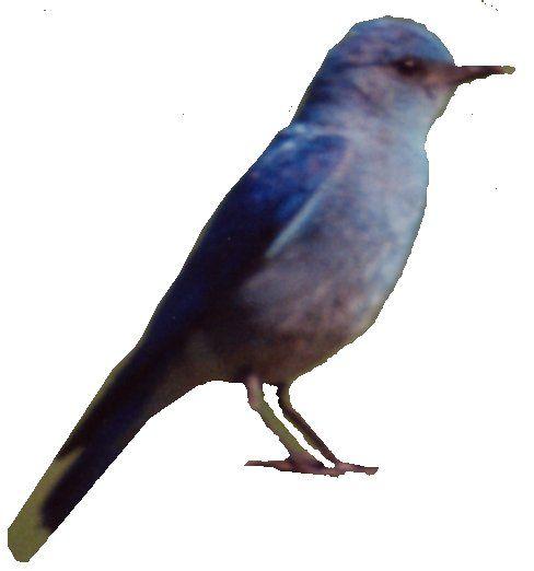 about rdrn history bluebird