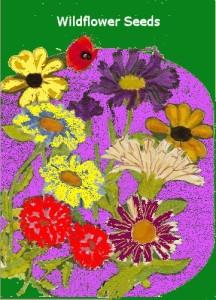 wild flower paackage